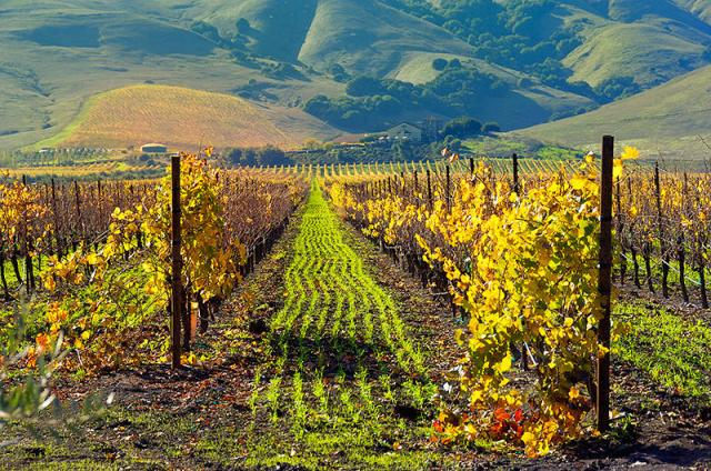 Gloria Ferrer Winery