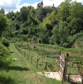 Trail & vegetable gardens