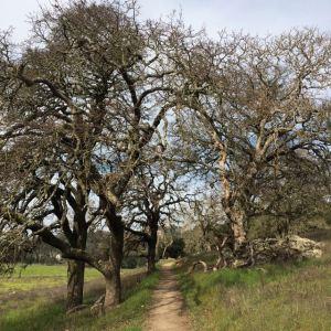Montini Ranch Trail